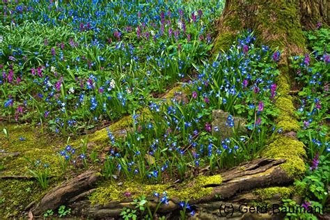 Www Botanischer Garten Bochum De by Botanischer Garten Bochum Gruppe7