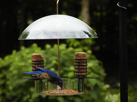 birds choice supper dome seed suet and mealworm bird feeder
