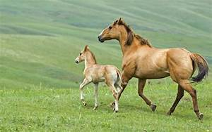 Baby Horse Facts | Baby Animal Facts