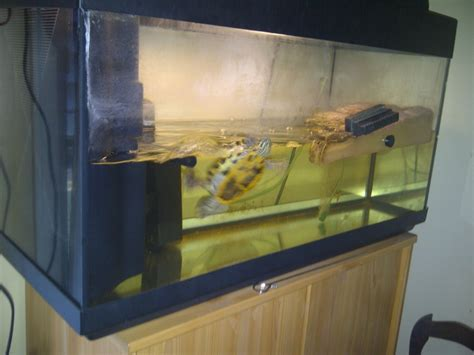 aquarium tortue de floride aquarium pour tortue de floride