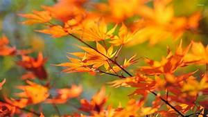 Autumn, Leaves, On, A, Branch, Wallpaper, -, Photography, Wallpapers