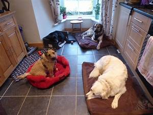 dogs at home breage helston cornwall tr13 9px With at home dog sitting