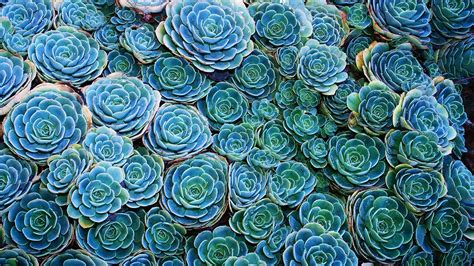 succulent wallpapers 51 images