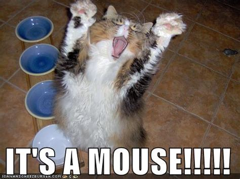 Mouse Memes - it s a mouse my contribution to this evil meme made with flickr
