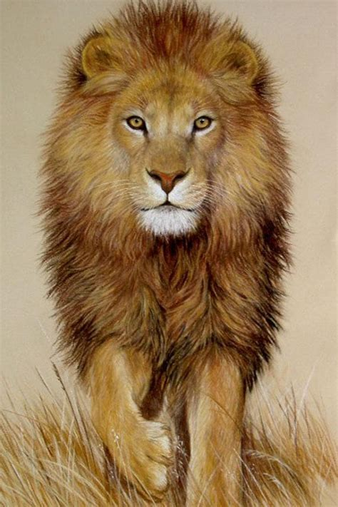 lion animation wallpaper hd iphone   iphone wallpaper