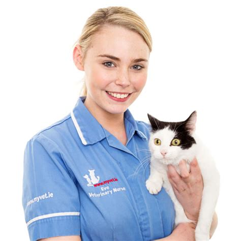 cat only appointments now available at hermitage vet clinic hermitage veterinary clinic