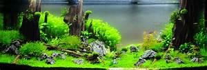 Aquarium Einrichten Beispiele : interview mit adrie baumann wie richte ich mein aquarium ein ~ Frokenaadalensverden.com Haus und Dekorationen