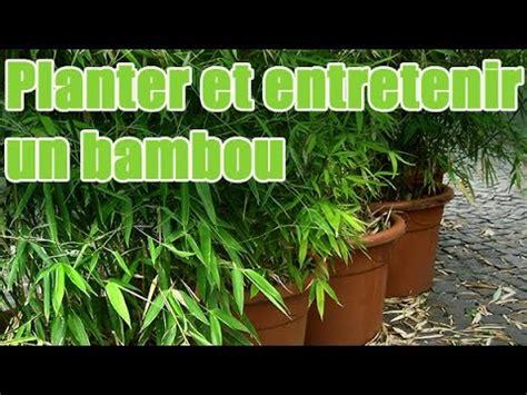comment planter et entretenir un bambou pour balcon