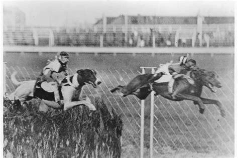 Monkeys riding greyhounds