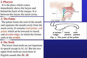 Introduction To Articulatory Phonetics  The Production Of Speech  The Physiological Aspect