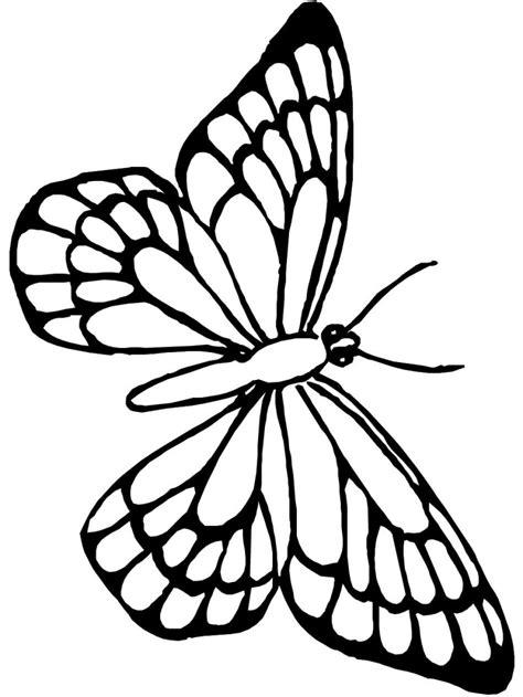 beautiful butterfly drawing  getdrawingscom