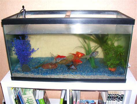 poisson dans un aquarium aquarium