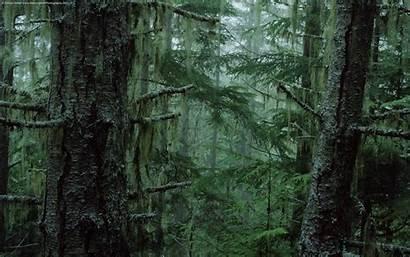 Forest Dark Background Backgrounds Desktop Cave