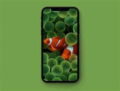 Wallpapers Iphone Apple Ios Optimized