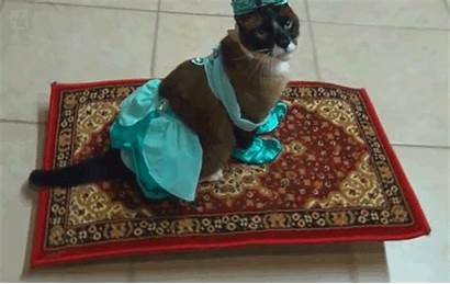 Carpet Magic Cat Funny Halloween Cats Gifs