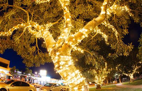 city of gold coast paradise point tree lighting image