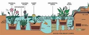 Van Ness Water Garden  Planting Supplies