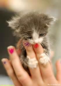 tiny cats small cat image