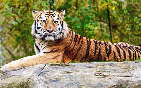 felidi selvatici  piu belli  natura animali pucciosi