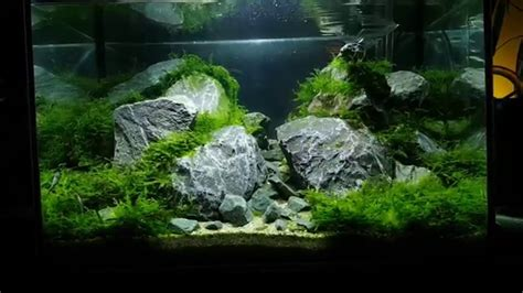 45x30x30 aquascape with rocks and moss and mirror