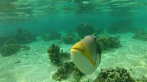 Heithaus Lab Blog: Moorea Reef Sharks Day 7: shark cam trial