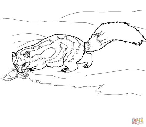 Kleurplaat Stinkdier by Spotted Skunk Catches A Rat Coloring Page Free Printable