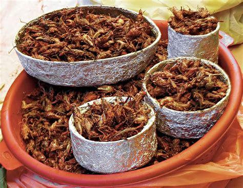 cuisine mexique 8 insectes utilisés dans la cuisine mexicaine