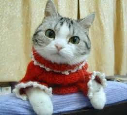 sweaters for cats the diary of a bookworm 109 cats in sweaters because