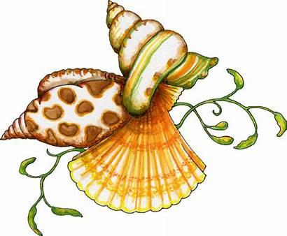 Seashell Shells Sea Clip Clipart Seashells Ocean