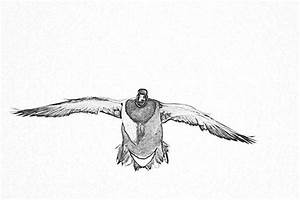 Mallard Duck Flying Drawing