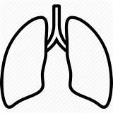 Lungs Lung Outline Clipart Icon Anatomy Organ Clip Transparent Coloring Medical Svg Vector Icons Sketch Clipartmag Webstockreview Clipground Template sketch template