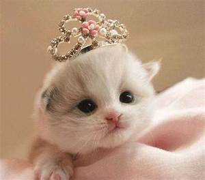 22 best Too cute baby animals images on Pinterest ...