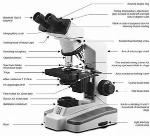 Choosing A Microscope