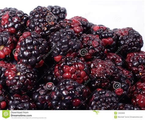 fresh blackberries fresh blackberries royalty free stock images image 12833699
