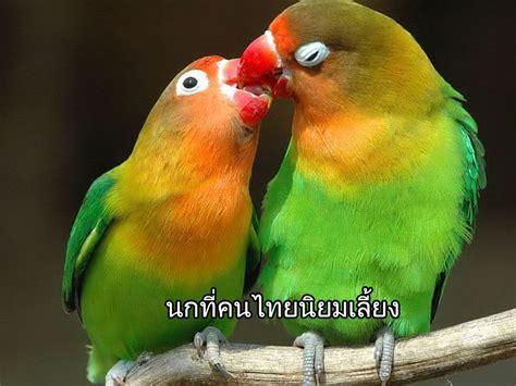 นกที่คนไทยนิยมเลี้ยง - Maxbet ibcbet เว็บไซต์อันดับ 1 แทง ...