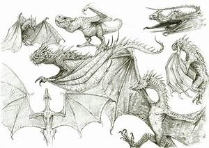 Dragon Sketches 1 by eoghankerrigan on DeviantArt