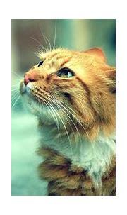 tiger cat wallpaper hd 4k ultra hd wallpaper | Cute cats ...
