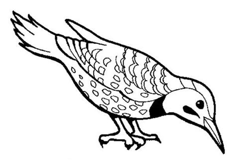beautiful bird find seed  eat coloring page color luna