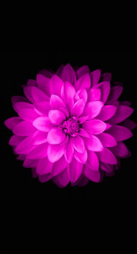flower iphone wallpapers pixelstalknet