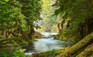 Beautiful Forest with River