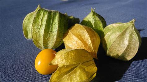 gratis billeder frugt baer sod blad blomst mad