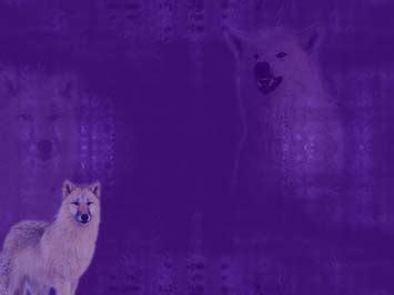 wolf  powerpoint template