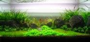 Aquascape Malaysia by Aquascaping World Competition Gallery