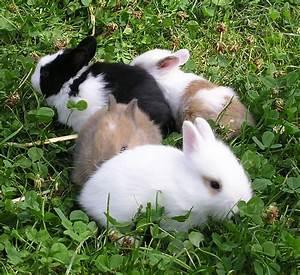 Kaninchenkäfig Für 2 Kaninchen : dataja junge kaninchen wikipedija ~ Frokenaadalensverden.com Haus und Dekorationen