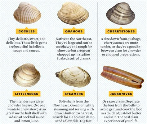 types of clams ebl february 2013
