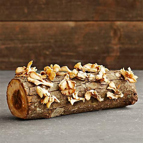 mushroom oyster log mushrooms farm edible kit sonoma williams denver urban kits grow garden landscaping diy larger