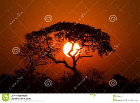 lion king sunset stock image image