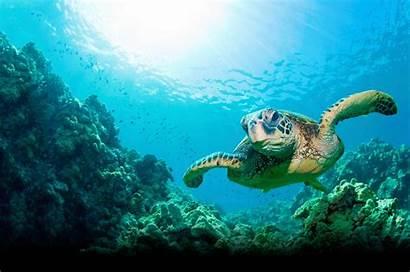 Ocean Wallpapers Turtle Wallpaper202 Cool Under Dezta