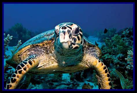 2012 June « Scientific Earth Conscientious