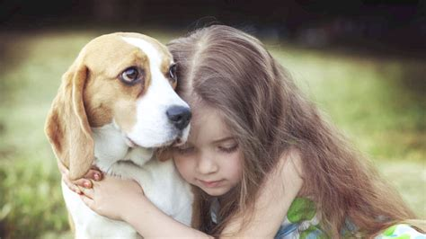 Science says Dogs don't like hugs?